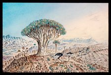 Quiver tree and ostriches, 19th century