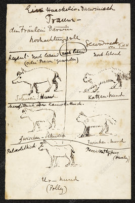 Huxley on Charles Darwin's dog, 1870s