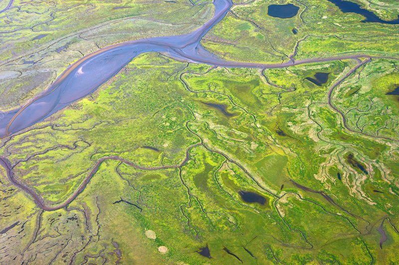 Salt marshes from the air.
