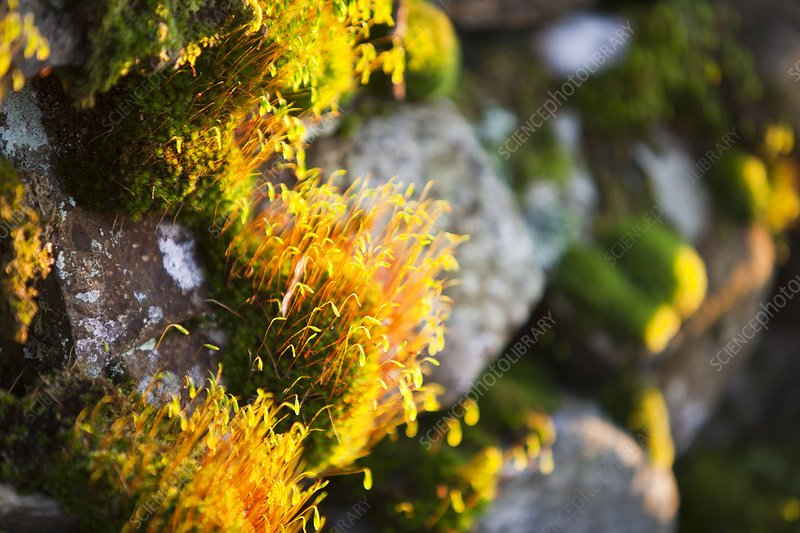 Fruiting bodies on moss