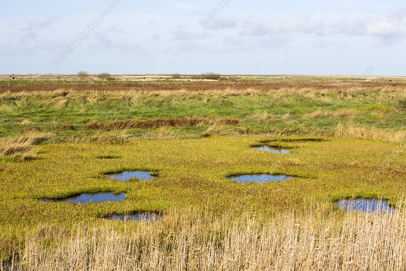 Saltmarsh, Cley, UK