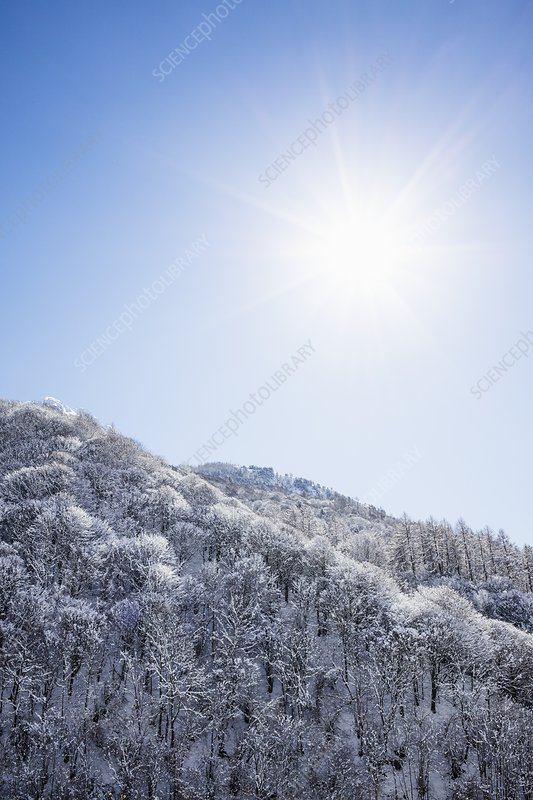 Mountain trees and snow in winter