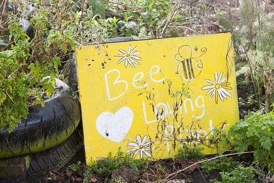 Bee loving plants