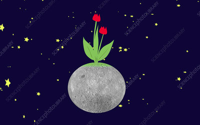 Flowering Moon, conceptual image