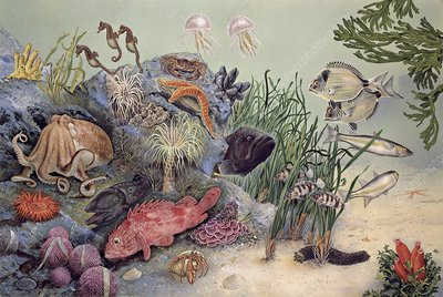 Various sea animals, illustration