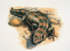 Close-up of a lizard, illustration