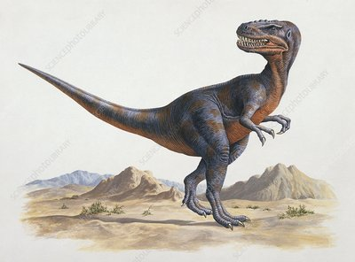 Alectrosaurus dinosaur, illustration