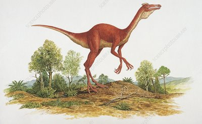 Side profile of a dinosaur, illustration