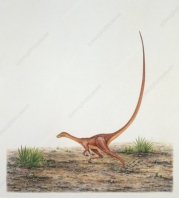 Alvarezsaurus dinosaur, illustration