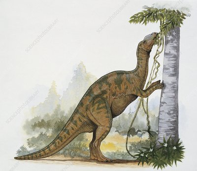 Hadrosaurus dinosaur, illustration