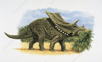 Chasmosaurus dinosaur, illustration