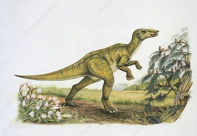 Secernosaurus dinosaur, illustration