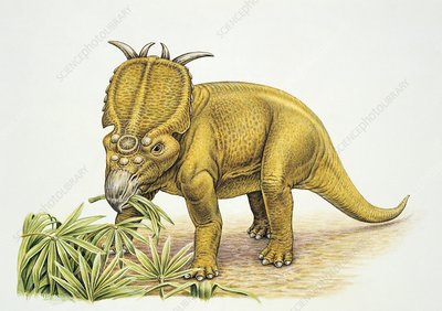 Dinosaur eating a leaf, illustration