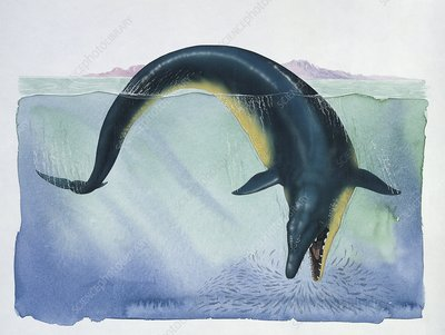 Basilosaurus fish, illustration