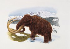 Mammoth, illustration