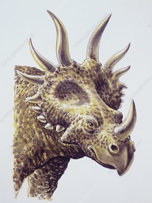 Styracosaurus, illustration