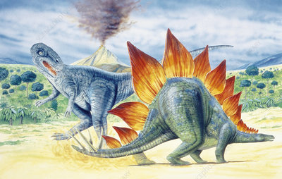Illustration of Stegosaurus