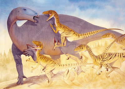 Illustration of Deinonychus attacking