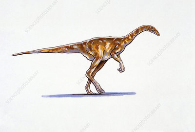 Illustration of Deinocheirus