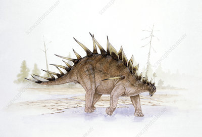 Illustration of Kentrosaurus