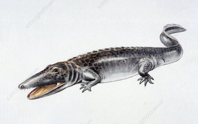 Illustration of Paracyclotosaurus