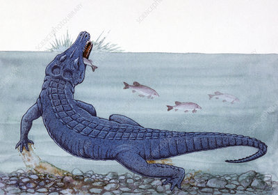Illustration of Orthosuchus