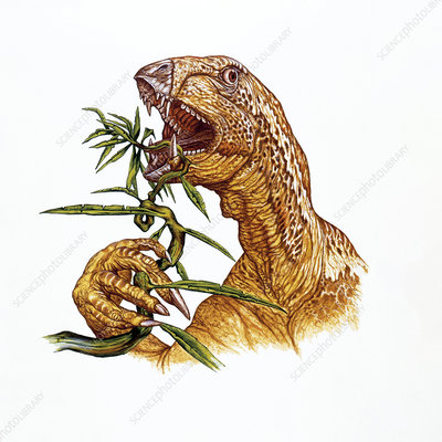 Illustration of Heterodontosaurus