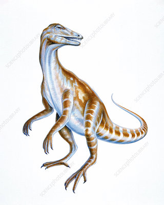 Illustration of Staurikosaurus