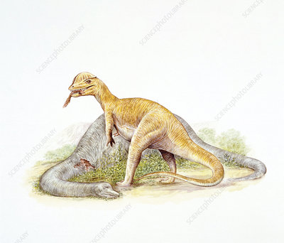 Illustration of Dilophosaurus