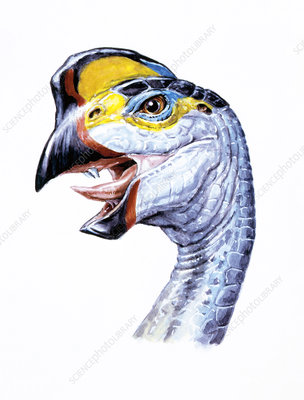 Illustration of Oviraptor