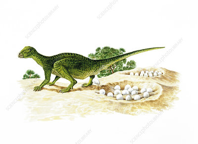 Illustration of Orodromeus laying eggs