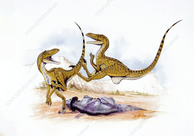 Illustration of two Velociraptors