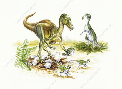 Illustration of Troodon