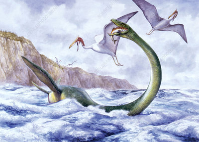 Illustration of Elasmosaurus