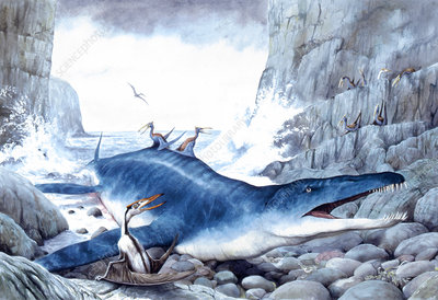 Illustration of Liopleurodon