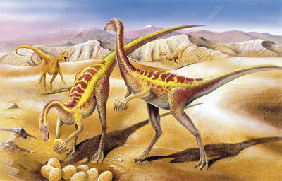 Illustration of Anserimimus by nest