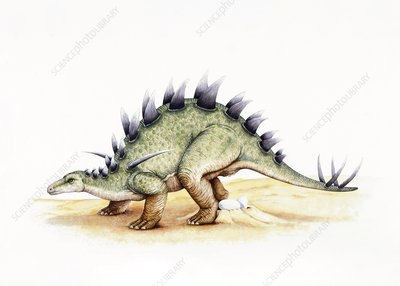Illustration of Lexovisaurus