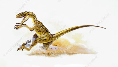 Illustration of Deinonychus running