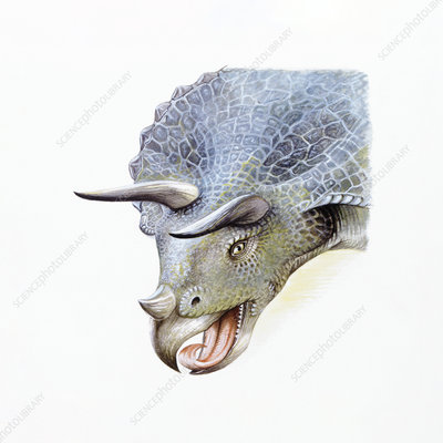 Illustration of Triceratops, close up