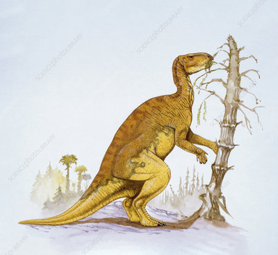 Illustration of Probactrosaurus
