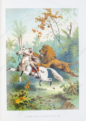 African lion attack, 19th century