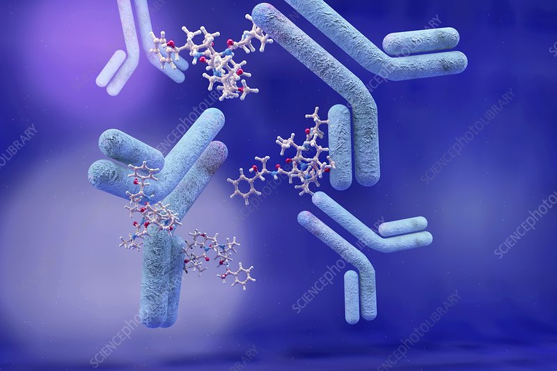 SOME FACTS ABOUT ANTIBODY-DRUG CONJUGATES