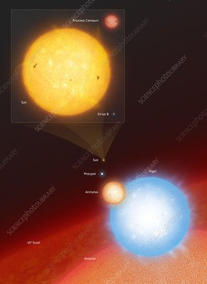 The Sun Compared to Seven Other Stars