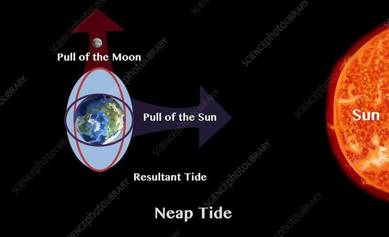 Neap Tide