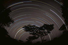 Star trails over the Southern Serengeti
