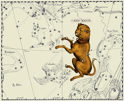 Canis Major Constellation, 1687