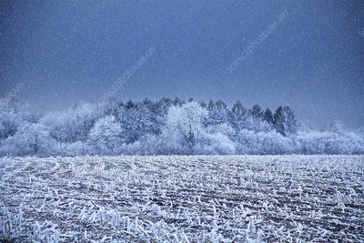Field covered in hoar frost