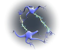 Nerve cells in multiple sclerosis