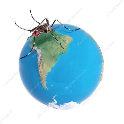 Mosquito on South America, illustration