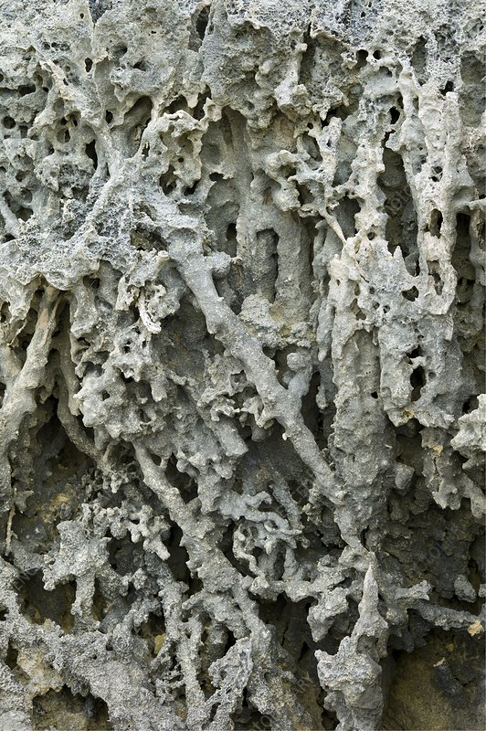 Cliff face with exposed rhizoliths